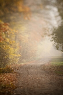 Germany, autumnal forest path - SBDF000519