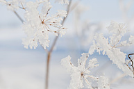 Detail of frozen plant - MJF000757