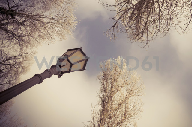 Germany, view to street lamp and tree tops from below - MJF000763