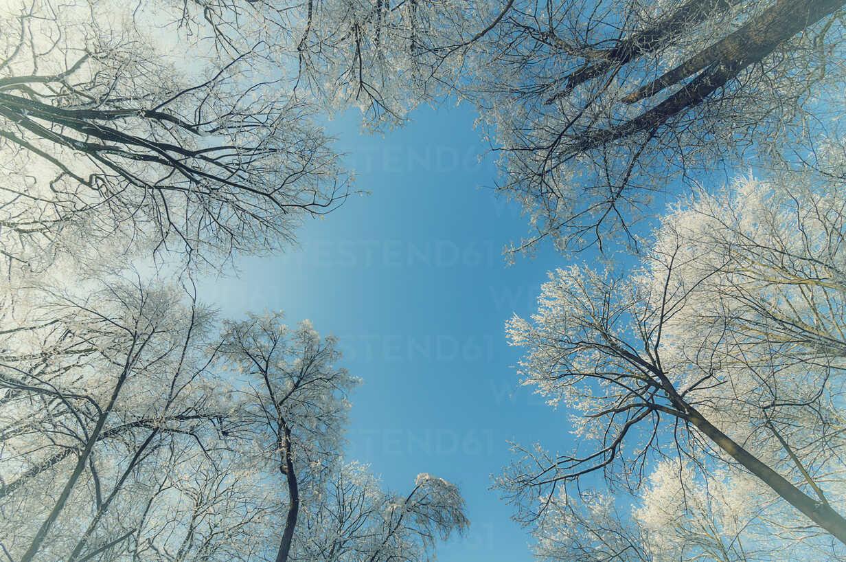 Germany, view to snow covered treetops - MJF000773 - Jana Mänz/Westend61