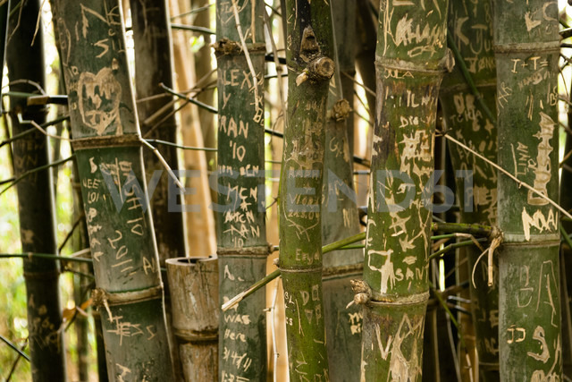 Australia, New South Wales, Sydney, names and dates carved on trunks of bamboo (Bambusoideae) in Royal garden - FBF000201 - Frank Blum/Westend61