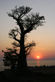 Malawi, Likoma Island, baobab tree (Adansonia) at Lake Malawi at sunset - JBAF000008