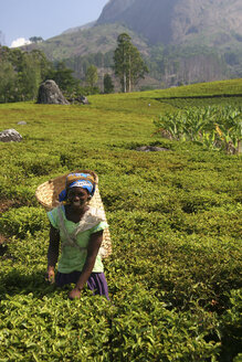 Malawi, Blantyre, female tea picker at work - JBA000029