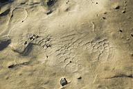Australia, Seal Rocks, lava structures - FBF000189