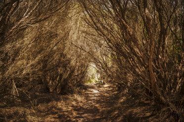 Australia, New South Wales, Hawks Nest, dry bushes on way - FBF000192