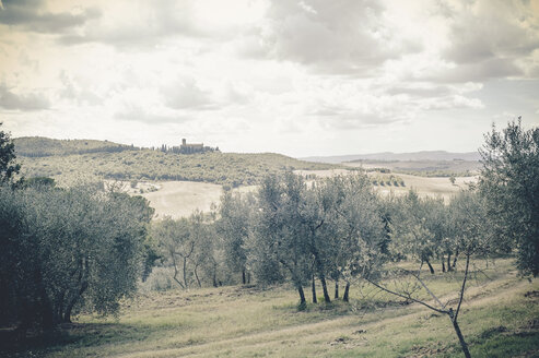 Italy, Tuscany, Val d'Orcia, Rolling landscape with olive trees - MJF000750