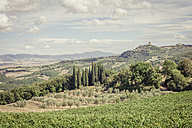Italy, Tuscany, Val d'Orcia, Castiglione d'Orcia, Vineyard and olive trees - MJF000738
