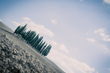 Italy, Tuscany, Val d'Orcia, Group of cypresses in field - MJF000851
