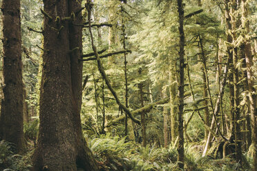 USA, Washington State, View of forest - MFF000854