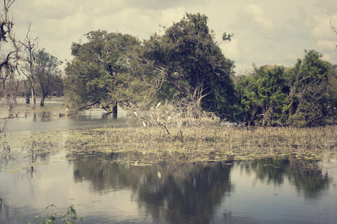 Sri Lanka, North Central Province, Anuradhapura, freshwater lake and old trees - DRF000494