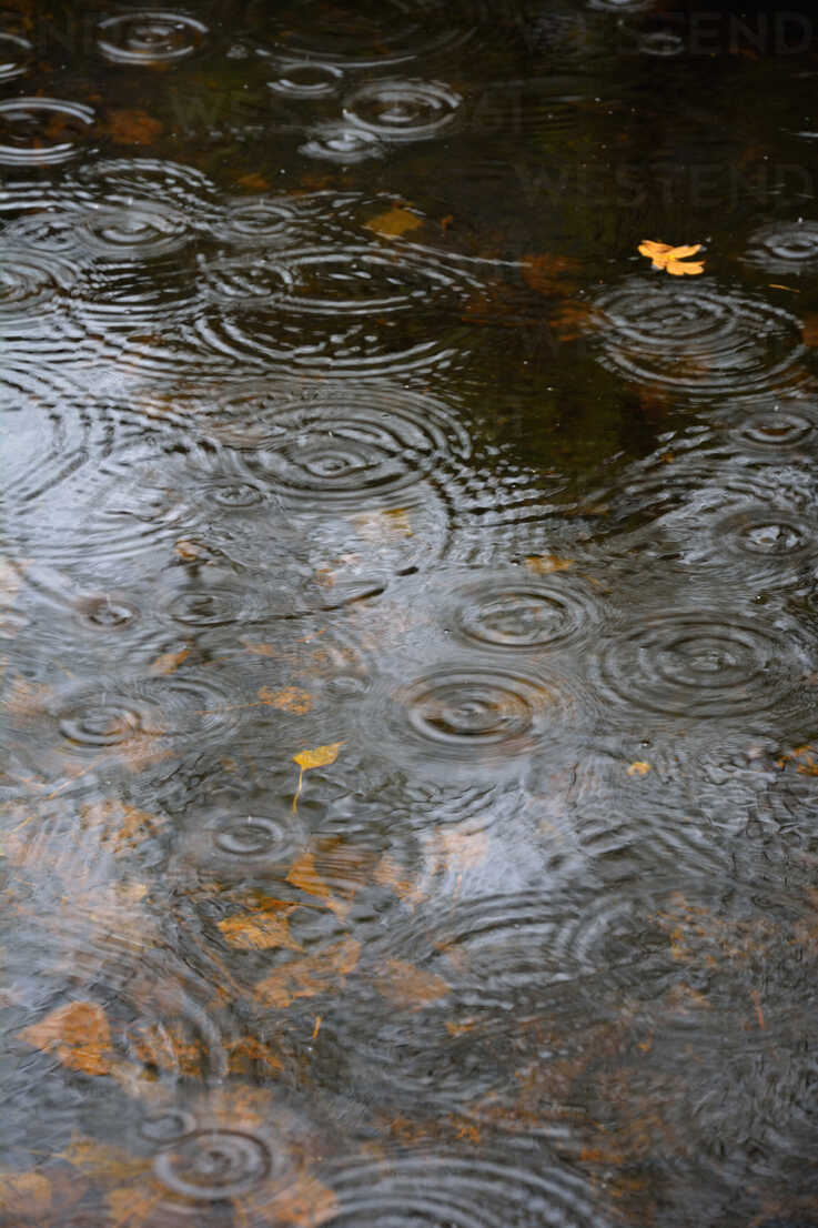 Germany, Bavaria, View of pond with raindrops - AXF000626 - Axel Ganguin/Westend61