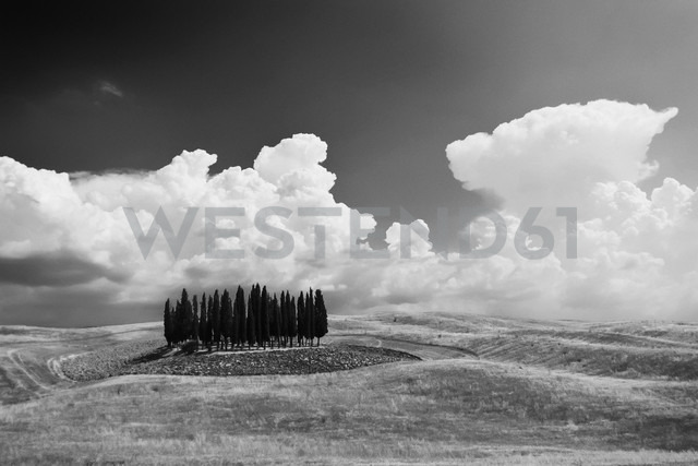 Italy, Tuscany, San Quirico d'Orcia, landscape with group of cypresses - PAF000339