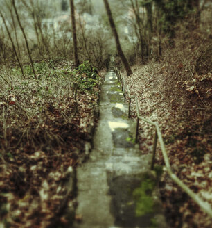 Stairs in the Forest - GSF000748