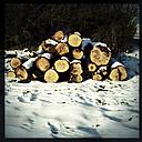 Cut wood on pile in the snow. Brandenburg, Germany. - ZMF000207