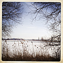 Window of nature: a view of the frozen Havel through trees and reeds, Brandenburg, Germany. - ZMF000206