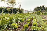 Vegetable garden - MFF000880