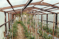 Greenhouse with plants - MFF000881