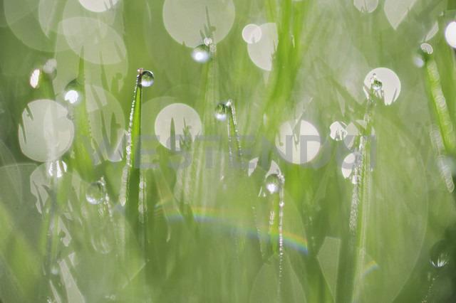 Dew on grass, close-up - RUEF001183 - Martin Rügner/Westend61