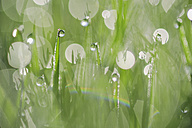 Dew on grass, close-up - RUEF001183