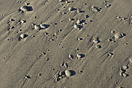 Pebbles on wet sandy beach, partial view - RUEF001166