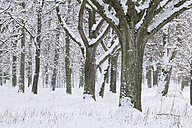 Germany, snow covered forest - RUEF001164