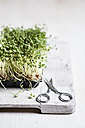 Cress (Lepidum sativum) in plastic bowl on chooping board and scissors - SBDF000574