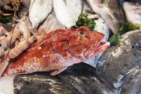 Italy, Gaeta, Fresh fish at fishmarket, close up - KAF000090
