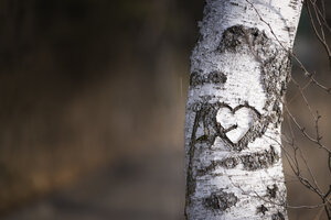 Austria, heart carved into a birch (Betula), partial view - MW000009