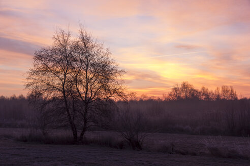 Germany. Lower Saxony, Sunrise, misty - SJF000089