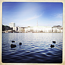 Inner Alster Lake with ducks, TV tower in the background. Hamburg, Germany - ZMF000235