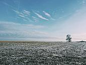 Saxony, Germany, Smartphone, Winter, Snow, single tree - MJF000876