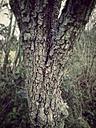 Germany, Euskirchen, Bark of old pear tree - MYF000166