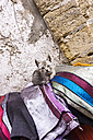 Morocco, Essaouira, Kasbah, cat lying on colorful cloths - THA000092