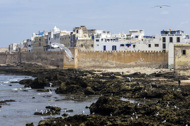 Morocco, Essaouira, Kasbah, seagulls in front of town - THAF000108