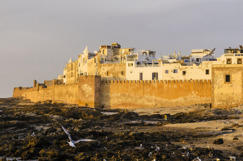 Morocco, Essaouira, Kasbah, seagulls in front of town - THAF000121