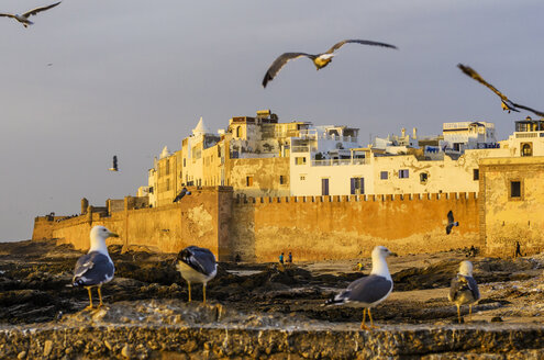 Morocco, Essaouira, Kasbah, seagulls in front of town - THAF000122