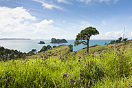 New Zealand, North Island, Waikato, Coromandel Peninsula, Gemstone Bay - JB000022