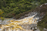 New Zealand, North Island, Bay of Plenty, Orakei Korako, sinter terrace with fumarole and rainforest - JB000044