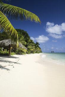 Seychelles, Praslin, palm at Anse Volbert beach - KRPF000303