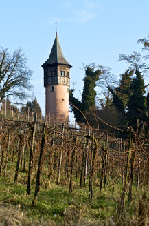 Germany, Baden-Wuerttemberg, Mainau Island, Schwedenturm and vineyard - JEDF000151