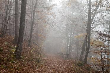 Germany, Bavaria, Upper Bavaria, Berchtesgadener Land, Berchtesgaden National Park, Schoenau at Koenigssee, fog at autumnal wood - WIF000388