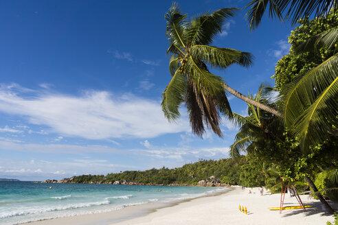 Seychelles, Praslin, palm (Cocos nucifera) at beach Anse Lazio - WEF000022
