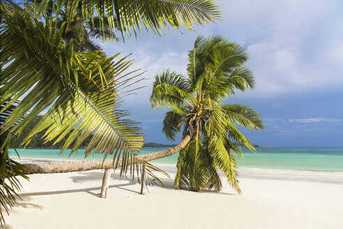 Seychelles, Praslin, Cote d'Or, coco palm (Cocos nucifera) at beach of Anse Volbert - WEF000024