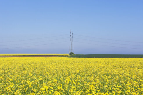 Germany, North Rhine-Westphalia, Pulheim, view to rape fields (Brassica napus) in front of overland high voltage power lines - GW002607