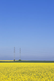 Germany, North Rhine-Westphalia, Pulheim, view to rape fields (Brassica napus) in front of overland high voltage power lines - GW002609