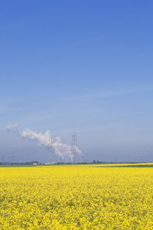 Germany, North Rhine-Westphalia, Pulheim, view to rape fields (Brassica napus) in front of overland high voltage power lines and emission of lignite power plant - GW002610
