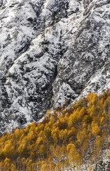 Austria, Styria, forest in autumn at Koppenpass - HHF004734