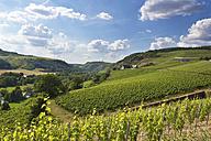 Germany, Rhineland-Palatinate, Vineyards at Nahe valley near Schlossboeckelheim - CSF020923