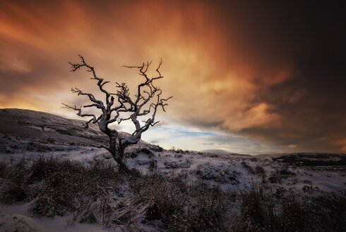 United Kingdom, Scotland, Isle of Skye, tree in winter - SMAF000200