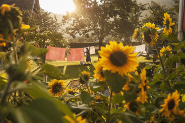 Austria, Radstadt, Farm, Female farmer hangs the washing on the line, sunflower in the foreground - HHF004780